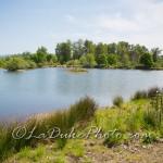 Delta Ponds Cover