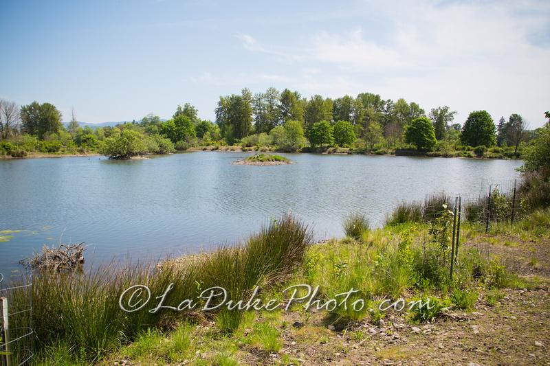 Delta Ponds – Bird Watching and Nature Walk