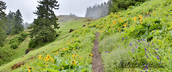Tire Mountain - Hiking & Wildflower Meadows